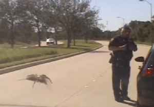 It's Behind You! - 'Giant' Spider Sneaks Up on Unsuspecting Cop [Video]