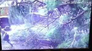 Biker almost crushed after branch falls from tree [Video]