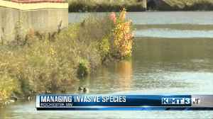 Conference tackles how to manage invasive species [Video]