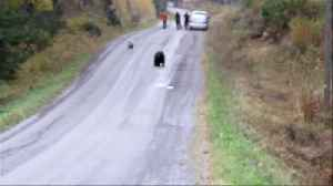 "Friendly dog decides to play ""tag"" with a wild bear [Video]"