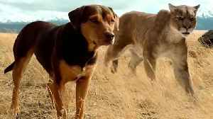 A Dog's Way Home - Official Trailer [Video]
