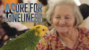 Animal Therapy: Helping the Elderly [Video]