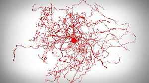 How Scientists Found a New Neuron Hiding in Our Brains [Video]
