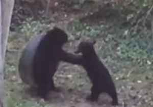 Bears Play With Backyard Tire Swing in Asheville, North Carolina [Video]