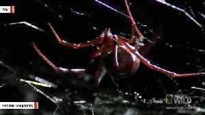 Man Reportedly Trying To Kill Spiders With A Blowtorch Sets Home On Fire [Video]