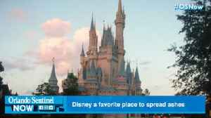 Disney is a favorite dumping ground for ashes [Video]