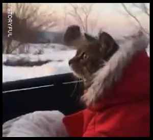 This little kitty can't believe her eyes 🙀❄ [Video]