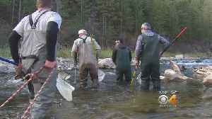 Big Thompson River Fish Examined After Harmful Highway 34 Work [Video]