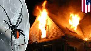 Man torches home after trying to fight spiders with fire [Video]