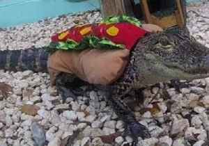 Festive Gators Goes Trick-or-Treating in Halloween Costumes [Video]
