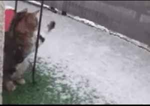 Curious Cat Tries to Catch Snow as Cold Weather Sweeps South-Central France [Video]