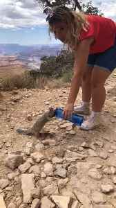 Squirrel drinks from woman's canister at Grand Canyon [Video]