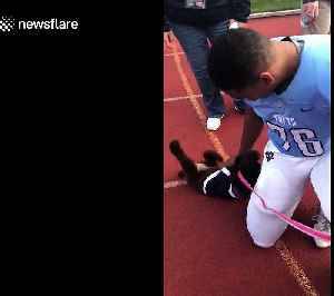 Dogs absolutely lose it when reunited with their owner [Video]