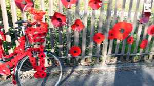 Street transforms itself into 'Poppy Road' with thousands of decorations to commemorate end of Great War [Video]