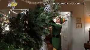 Follow These Simple Tips to Find the Perfect Christmas Tree [Video]