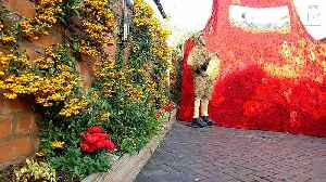 Thousands of knitted poppies hung from historic pub in stunt two years in the making [Video]