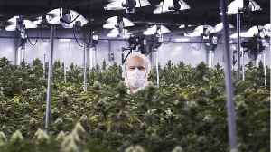 Cannabis Companies' 'Backdoor' Strategy To Public Markets [Video]