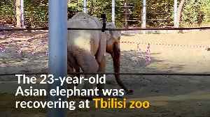 Elephant recovers after tusk surgery in Tbilisi zoo [Video]