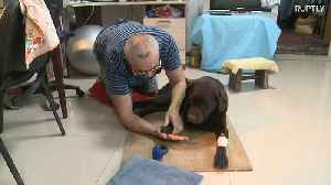 Visually impaired man takes care of disabled guide-dog following collision with car [Video]