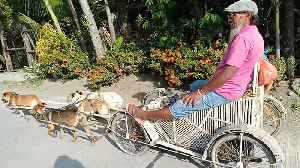 Pensioner's Pet Dogs Pull Him In Bamboo Sleigh [Video]