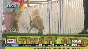 Dogs compete in National Dock Jumping competition, Hogs and Air Dogs [Video]
