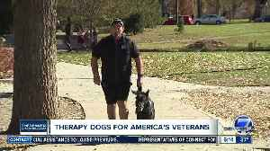 News video: Therapy dogs for America's veterans