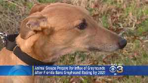 What Will Happen To 15,000 Greyhounds After Florida Bans Racing? [Video]