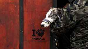 Greyhound Racing Ban Going Into Effect, Thousands Of Dogs Will Need A Home [Video]