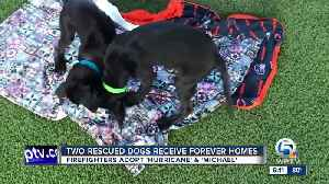 Firefighters adopt dogs they rescued from Hurricane Michael [Video]