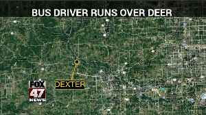 School bus driver drives over injured deer to end suffering [Video]