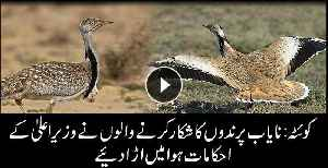 Rare birds' hunting continues in Balochistan [Video]