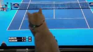 Adorable cat love to watch tennis matches [Video]