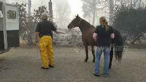 Horse rescued from deadly Californian Camp Fire [Video]