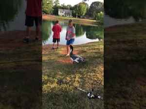 Boy Gets Attacked While Trying to Feed Duck [Video]