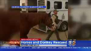 Actor Rick Schroder, LA County Sheriff's Deputies Get Horses, Donkeys To Safety [Video]