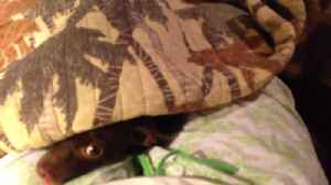 News video: These Pets Love to Play Hide and Seek