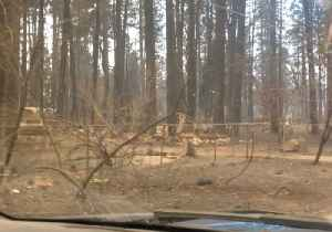 Local Reporter Drives Along Scorched Street in Paradise, California [Video]
