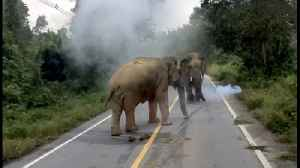 Male Elephants Square Up Causing Traffic Jam [Video]