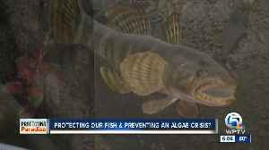 Can St. Lucie River rare fish play role in Lake Okeechobee discharge decisions? [Video]
