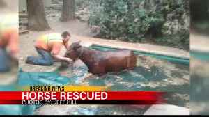 Horse Rescued from Paradise During the Camp Fire [Video]
