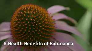 What Echinacea Can Do For Your Health [Video]