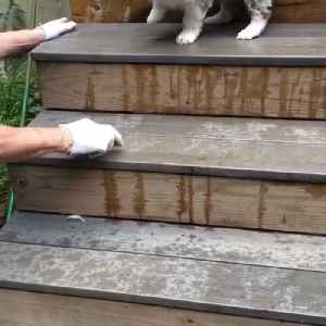 Australian Shepard Puppy Takes First Steps Down Stairs [Video]