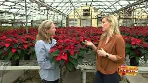 Your Destination for Holiday Greens, Décor and More [Video]