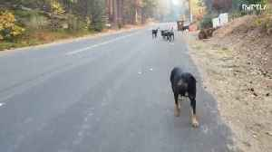 Californian man volunteers to shelter animals fleeing from wildfires [Video]