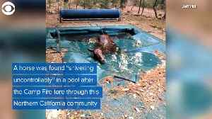 WEB EXTRA: Horse Rescued From Pool After Wildfire [Video]