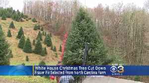 White House Christmas Tree Cut Down From North Carolina Farm [Video]