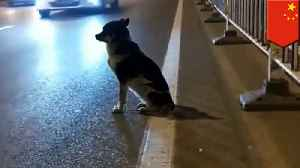 Loyal dog waits nearly 3 months for owner to return [Video]