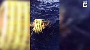 Fishermen to the rescue! Trapped sea turtle freed from plastic [Video]