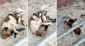 Puppy's Has A Scrape With Tree Snake [Video]
