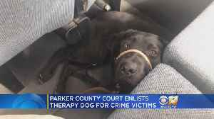 North Texas County Welcomes Violent Crime Victim Assistance Dog [Video]